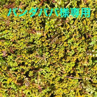 花山椒 100g(野菜)