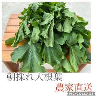 栄養いっぱい 朝どれ大根の葉っぱ 80サイズ(野菜)