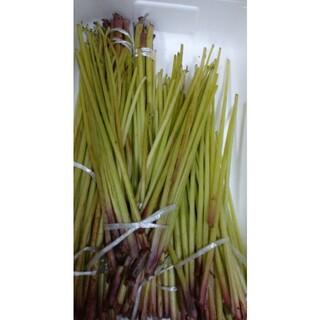山菜 天然 ふき 静岡産(野菜)