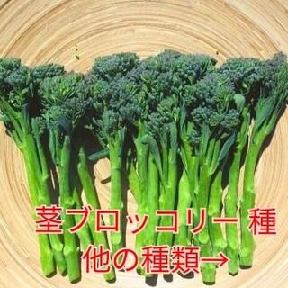 野菜種☆茎ブロッコリー☆変更→芽キャベツ 長ナス スイスチャード オクラ 空芯菜(野菜)