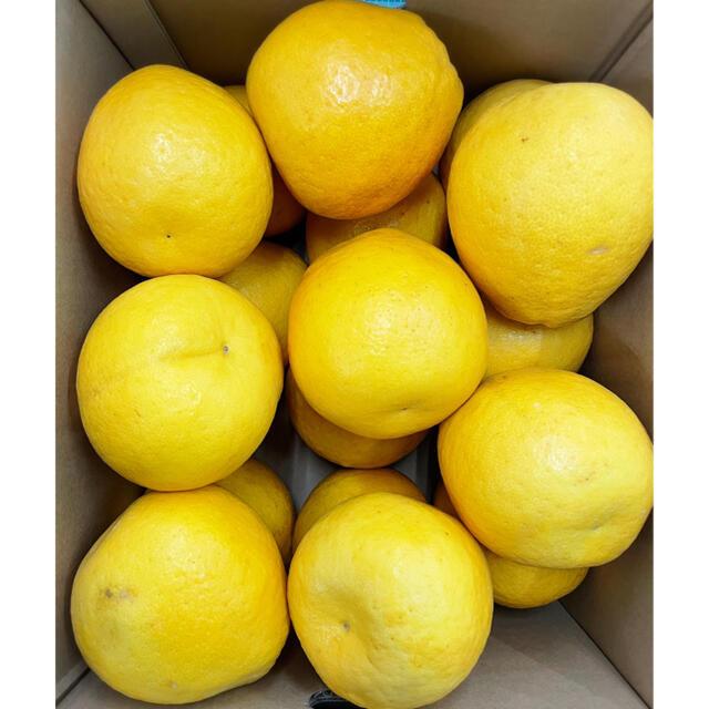 【河内晩柑】4L8kg+【鹿本西瓜】2L 7.5kg+宮崎完熟マンゴー370g 食品/飲料/酒の食品(フルーツ)の商品写真