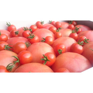 イチ押しのオマケ付❗️訳ありソムリエトマト5kg(20玉〜35玉)(野菜)