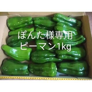 静岡県産ピーマン詰め合わせセット(野菜)