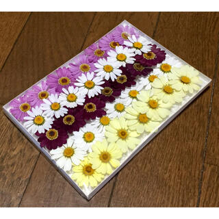 s③ 銀の紫陽花が作った可愛いマーガレットのドライフラワー(ドライフラワー)