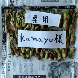 たらの芽 kamayu様専用(野菜)