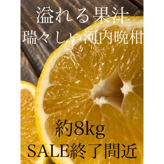 愛媛ミカン 訳あり 河内晩柑 約8kg 柑橘 みかん(フルーツ)