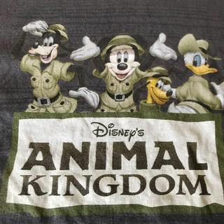 Disney - WDW アニマルキングダム Tシャツ