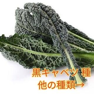 野菜種☆黒キャベツ☆変更→芽キャベツ ミニトマト ほうれん草 スイスチャード(野菜)