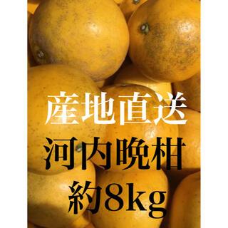 愛媛ミカン訳あり河内晩柑 約8kg 柑橘みかん(フルーツ)