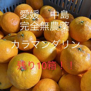 愛媛 完全無農薬カラマンダリン 10キロ(フルーツ)