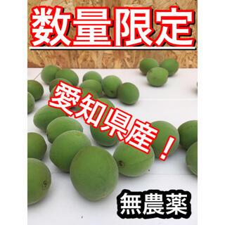【梅約1.5kg】愛知県産※無農薬