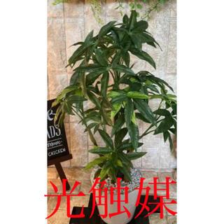 光触媒 人工観葉植物 ウォールグリーン 造花 インテリア パキラ62