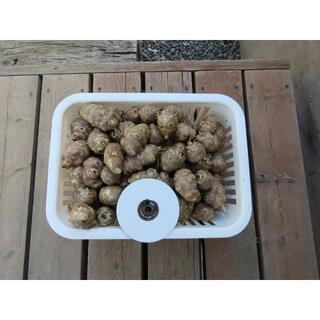 北海道十勝芽室産春堀 キクイモ 4kg 無農薬栽培 土付き