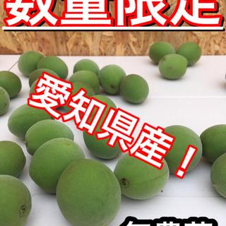 梅 無農薬 約1.5kg (フルーツ)