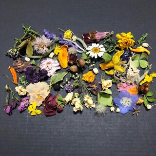 小さなお花の花材  ドライフラワー ナチュラル 素材  S-5(ドライフラワー)