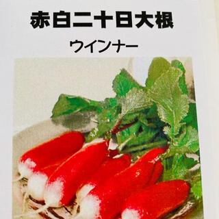赤白二十日大根 ウインナー 野菜種 30個(野菜)