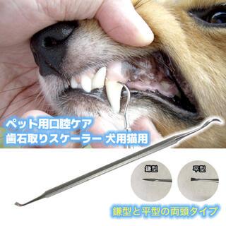歯石取り スケーラー 犬猫用 犬 猫 口腔ケア 歯石除去 歯磨き ハミガキ 口臭