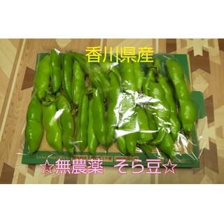 香川県産 無農薬そら豆(野菜)