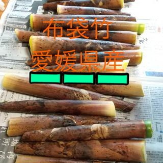 たけのこ タケノコ 布袋竹 筍(野菜)