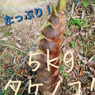 新鮮タケノコ 5kg(野菜)