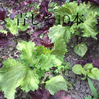 無農薬 青紫蘇 8本 (野菜)