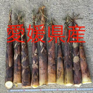 たけのこ タケノコ 布袋竹 (野菜)