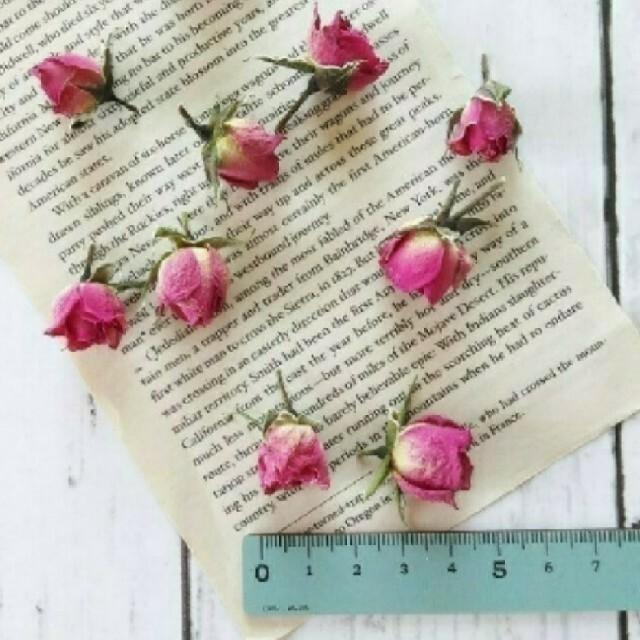 ミニバラ(ヘッド)  ピンク 10輪 ハンドメイドのフラワー/ガーデン(ドライフラワー)の商品写真