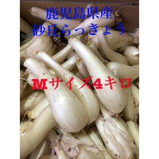 鹿児島県産砂丘らっきょうMサイズ4キロ(野菜)