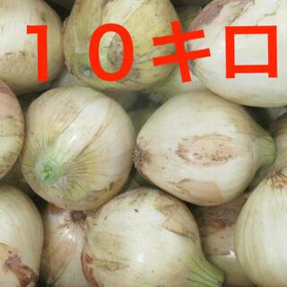 玉ねぎ 玉葱 (野菜)