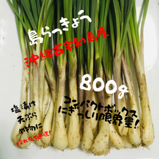 大好評! ここだけ!【沖縄本島やんばる産】島らっきょう800g!!(野菜)