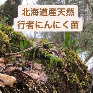 北海道産天然行者にんにく苗と天然山わさび苗(野菜)