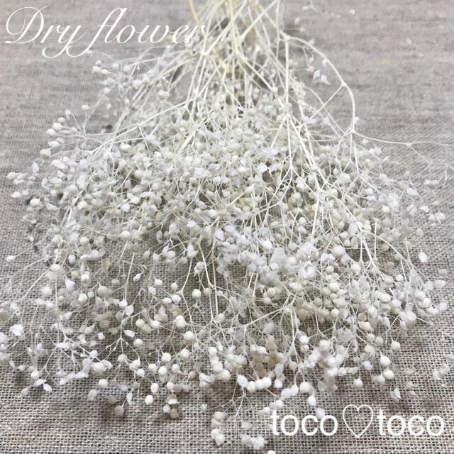 かすみ草 ドライフラワー 蕾〈ホワイト〉 ハンドメイドのフラワー/ガーデン(ドライフラワー)の商品写真