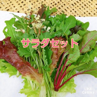 畑直送‼︎ 食べきりサラダセット 農薬不使用