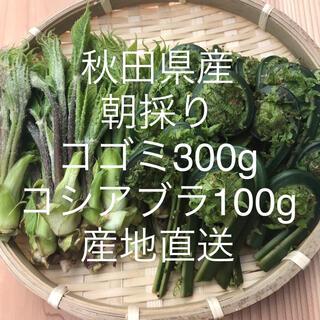 秋田県産 コゴミ300g コシアブラ100g        産地直送