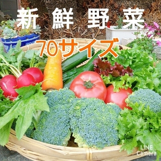 新鮮朝採り【畑〜直送便♪70サイズ】農薬不使用