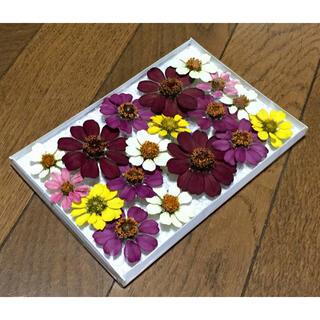 s⑤ 銀の紫陽花が作った大人色ジニアのドライフラワー(ドライフラワー)