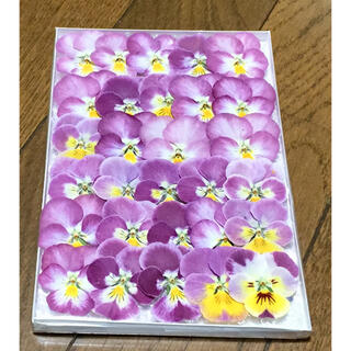 s⑥ 銀の紫陽花が作った可愛いピンクビオラのドライフラワー(ドライフラワー)