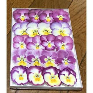 s⑦ 銀の紫陽花が作った可愛いピンクビオラのドライフラワー‼️(ドライフラワー)