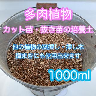 多肉植物の土 サボテンの土 多肉植物用土 葉挿し種まき(その他)