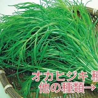 野菜種☆オカヒジキ☆変更→芽キャベツ 黒キャベツ ラディッシュ ほうれん草 春菊(野菜)