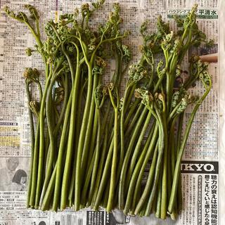 山菜 天然わらび 約500g  5月7日 朝取り新鮮!