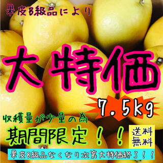 【愛媛 訳あり】フルーツ 果物 ミカン くだもの 柑橘 みかん《河内晩柑》(フルーツ)