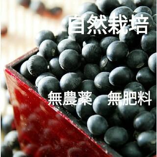 自然栽培 黒大豆 500g   農薬不使用 無肥料 自家採種 北海道産 (野菜)