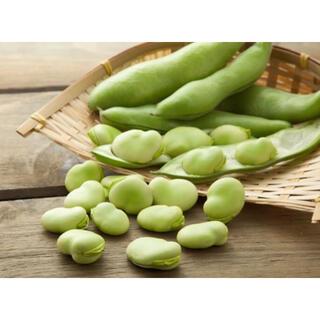 今が旬! 採りたて新鮮✧*。 そら豆 4㎏ 〜畑からの直送便〜 無農薬(野菜)