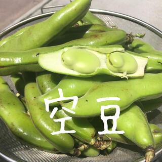 朝摘み★福岡県産 空豆約1kgサヤつき 栽培期間中農薬不使用(野菜)