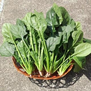 ほうれん草【無農薬】野菜(野菜)