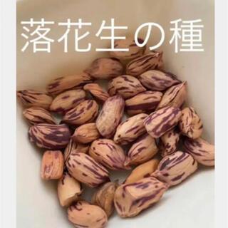 ポリフェノール豊富!珍しいマーブル 落花生の種15粒(野菜)