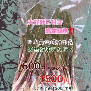 《大好評に付き感謝価格》 稚内産行者にんにく 600g(野菜)