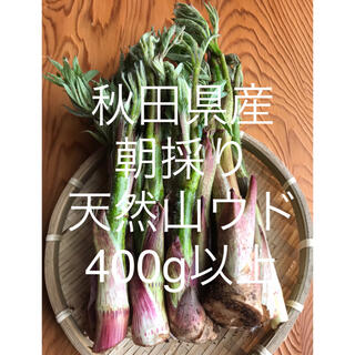 秋田県産 山ウド 400g以上 朝採り  新鮮産地直送