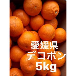 愛媛県 デコポン 5kg